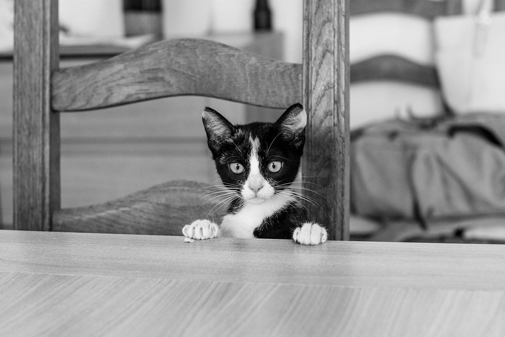 séance photo famille à domicile enfants portrait Toulouse lauragais chat