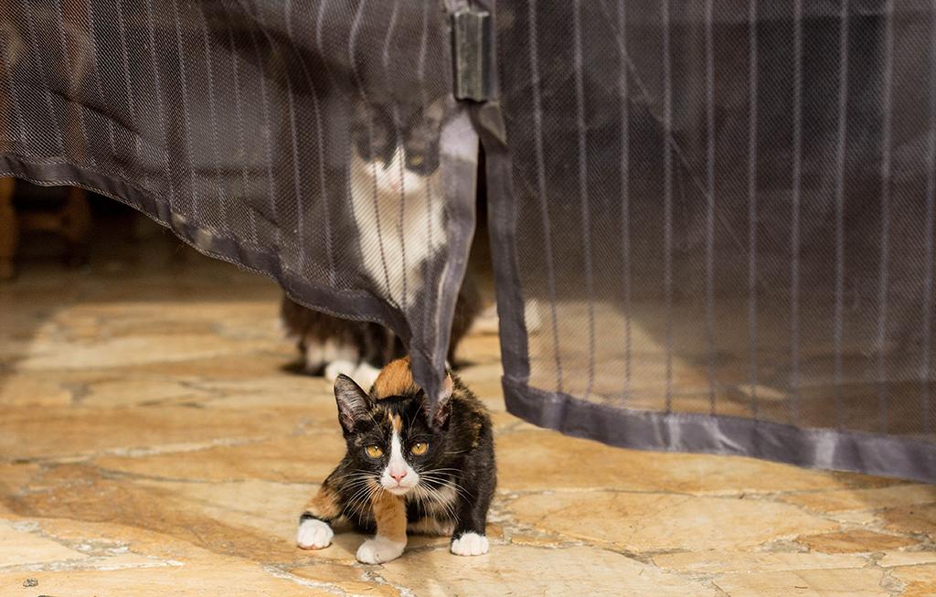 séance photo famille à domicile enfants chat Toulouse lauragais